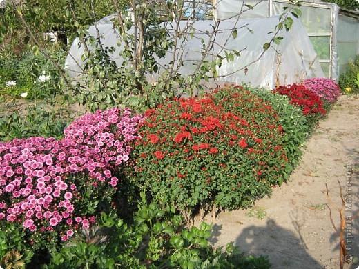 Всем любителям цветов хочу предложить прощальный парад цветов. фото 23