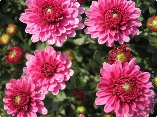 Всем любителям цветов хочу предложить прощальный парад цветов. фото 13