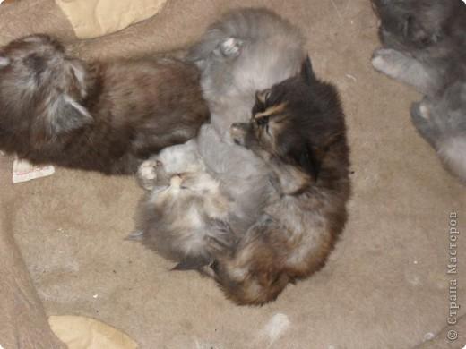 В этот раз у нас три девочки и один мальчик. фото 3