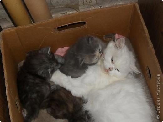 В этот раз у нас три девочки и один мальчик. фото 5