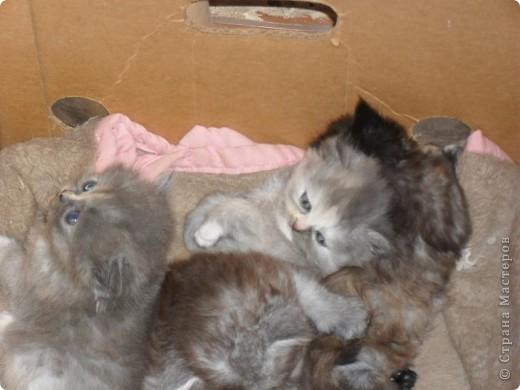 В этот раз у нас три девочки и один мальчик. фото 21