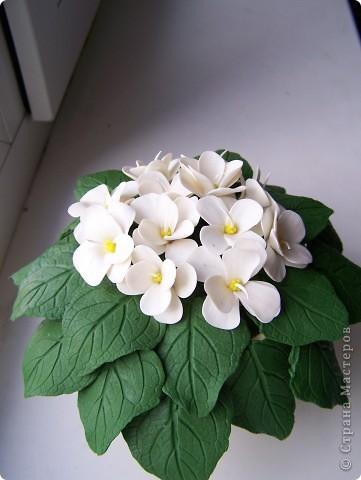Привет всем!Расцвел у меня новый цветочек,оцените пожалуйста дорогие мастерицы.Лепила цветочек по МК Ксюши25:http://stranamasterov.ru/node/167468 Огромное ей спасибо фото 1
