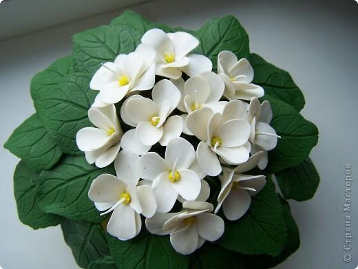 Привет всем!Расцвел у меня новый цветочек,оцените пожалуйста дорогие мастерицы.Лепила цветочек по МК Ксюши25:http://stranamasterov.ru/node/167468 Огромное ей спасибо фото 2