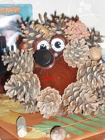 Этот ёжик из сосновых шишек сделан для выставки в детском саду. Мне очень понравился процесс работы - активно помогали дети. Сбор листьев и шишек - это то, что надо ребятам. фото 3