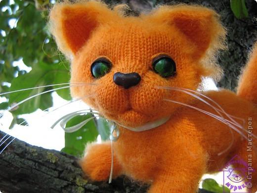 Котик Котауси фото 1