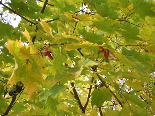 Фею Осень мы придумали с дочками на школьный конкурс поделок из природного материала. Основа тряпочная, использованы осенние цветы, сухая трава, сухие листья, желуди. Внизу фигурки ежиков, цветов сделала дочь из желудей и пластилина. фото 5