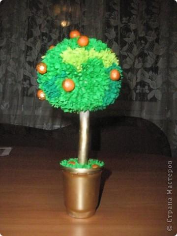 топиарий -апельсиновое дерево