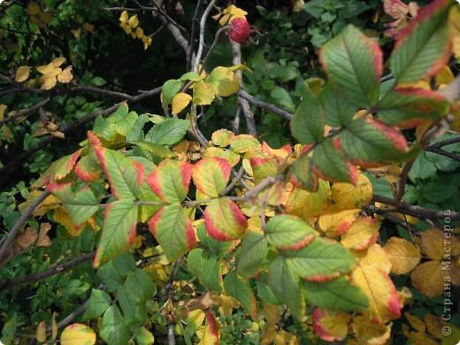 Фею Осень мы придумали с дочками на школьный конкурс поделок из природного материала. Основа тряпочная, использованы осенние цветы, сухая трава, сухие листья, желуди. Внизу фигурки ежиков, цветов сделала дочь из желудей и пластилина. фото 4