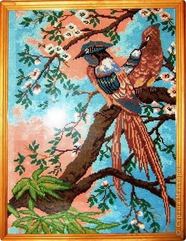 На волю птицу отпускаю, А с ней мечту, свои желанья. Пусть красота не знает клетки, Пусть будет общим достоянием!