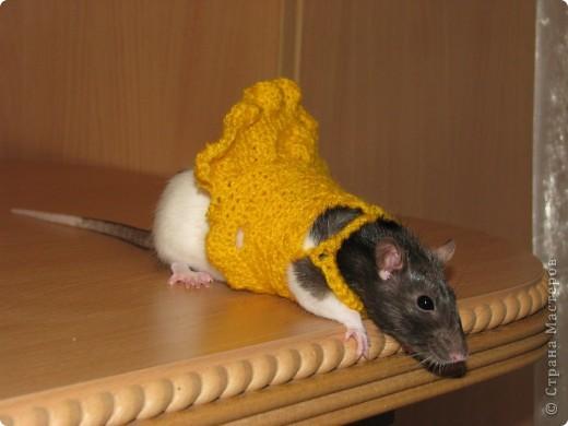 дочка связала для крыски