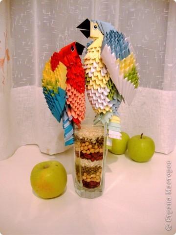 Красавцы-попугаи)