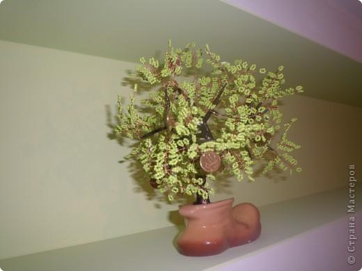 Денежное дерево в башмаке фото 2