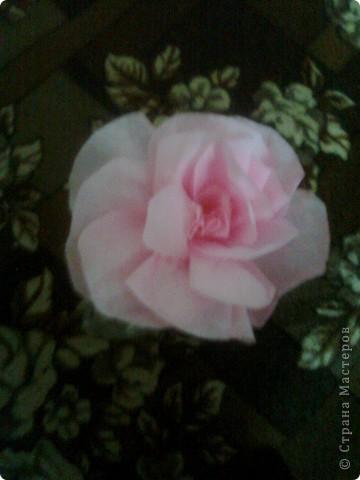 Бутылка Виноградная и цветок в ней фото 4
