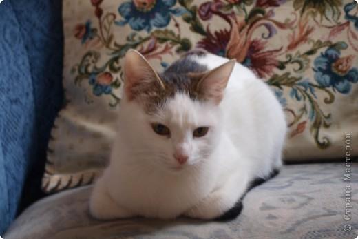 Моя Мусенька очень ласковая и интеллигентная кошечка. фото 1