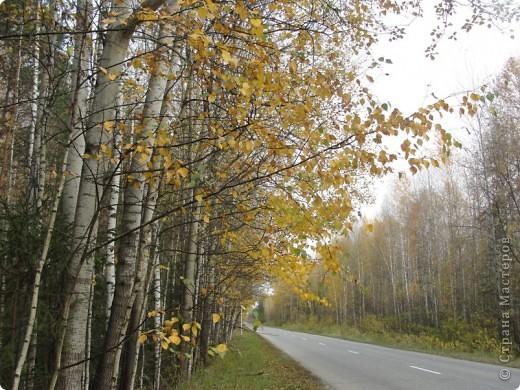 В те выходные было пасмурно, в лес мне ехать не хотелось, но я решила поехать, взяла с собой ноутбук и модем - если что, посижу в машине.   В дороге на заднем сидении сделала макияж и прическу.Это хорошо отвлекало от неприятных ощущений.  В ту местность в лес мы едем впервые. Леса почти всё время по обе стороны от дороги, чередуясь пролесками и деревнями. Очень красиво! И часто-часто стоящие машины около трассы - тоже за грибами приехали.  фото 37