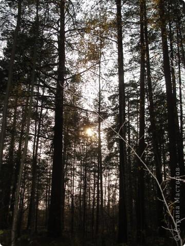 В те выходные было пасмурно, в лес мне ехать не хотелось, но я решила поехать, взяла с собой ноутбук и модем - если что, посижу в машине.   В дороге на заднем сидении сделала макияж и прическу.Это хорошо отвлекало от неприятных ощущений.  В ту местность в лес мы едем впервые. Леса почти всё время по обе стороны от дороги, чередуясь пролесками и деревнями. Очень красиво! И часто-часто стоящие машины около трассы - тоже за грибами приехали.  фото 41