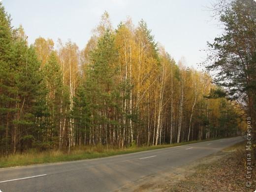 В те выходные было пасмурно, в лес мне ехать не хотелось, но я решила поехать, взяла с собой ноутбук и модем - если что, посижу в машине.   В дороге на заднем сидении сделала макияж и прическу.Это хорошо отвлекало от неприятных ощущений.  В ту местность в лес мы едем впервые. Леса почти всё время по обе стороны от дороги, чередуясь пролесками и деревнями. Очень красиво! И часто-часто стоящие машины около трассы - тоже за грибами приехали.  фото 42
