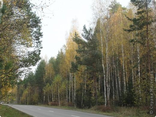 В те выходные было пасмурно, в лес мне ехать не хотелось, но я решила поехать, взяла с собой ноутбук и модем - если что, посижу в машине.   В дороге на заднем сидении сделала макияж и прическу.Это хорошо отвлекало от неприятных ощущений.  В ту местность в лес мы едем впервые. Леса почти всё время по обе стороны от дороги, чередуясь пролесками и деревнями. Очень красиво! И часто-часто стоящие машины около трассы - тоже за грибами приехали.  фото 50