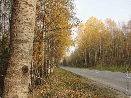 В те выходные было пасмурно, в лес мне ехать не хотелось, но я решила поехать, взяла с собой ноутбук и модем - если что, посижу в машине.   В дороге на заднем сидении сделала макияж и прическу.Это хорошо отвлекало от неприятных ощущений.  В ту местность в лес мы едем впервые. Леса почти всё время по обе стороны от дороги, чередуясь пролесками и деревнями. Очень красиво! И часто-часто стоящие машины около трассы - тоже за грибами приехали.  фото 51