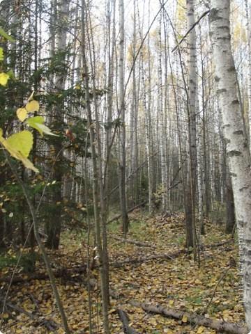 В те выходные было пасмурно, в лес мне ехать не хотелось, но я решила поехать, взяла с собой ноутбук и модем - если что, посижу в машине.   В дороге на заднем сидении сделала макияж и прическу.Это хорошо отвлекало от неприятных ощущений.  В ту местность в лес мы едем впервые. Леса почти всё время по обе стороны от дороги, чередуясь пролесками и деревнями. Очень красиво! И часто-часто стоящие машины около трассы - тоже за грибами приехали.  фото 54