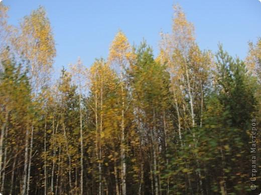 В те выходные было пасмурно, в лес мне ехать не хотелось, но я решила поехать, взяла с собой ноутбук и модем - если что, посижу в машине.   В дороге на заднем сидении сделала макияж и прическу.Это хорошо отвлекало от неприятных ощущений.  В ту местность в лес мы едем впервые. Леса почти всё время по обе стороны от дороги, чередуясь пролесками и деревнями. Очень красиво! И часто-часто стоящие машины около трассы - тоже за грибами приехали.  фото 56