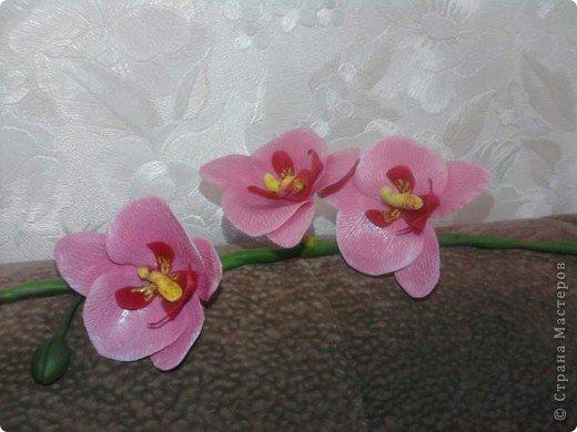 Вот такие орхидейки расцвели у меня дома!!!! фото 1