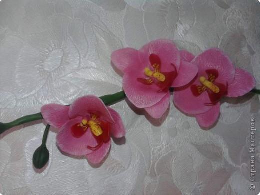 Вот такие орхидейки расцвели у меня дома!!!! фото 2