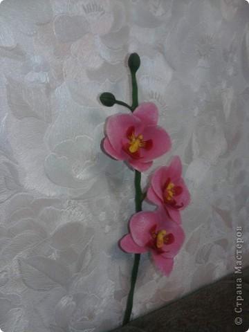 Вот такие орхидейки расцвели у меня дома!!!! фото 3