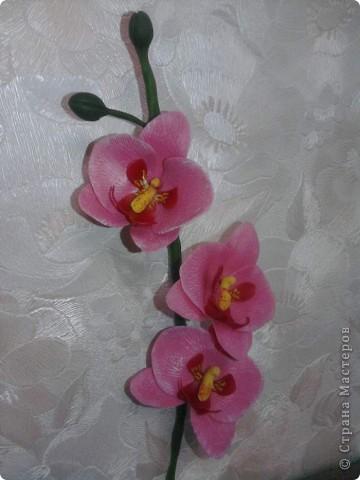 Вот такие орхидейки расцвели у меня дома!!!! фото 4