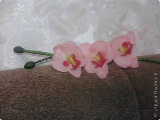 Вот такие орхидейки расцвели у меня дома!!!! фото 5