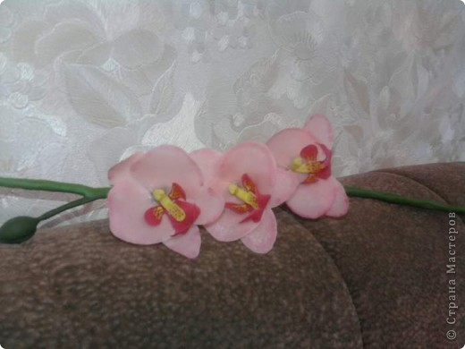 Вот такие орхидейки расцвели у меня дома!!!! фото 6