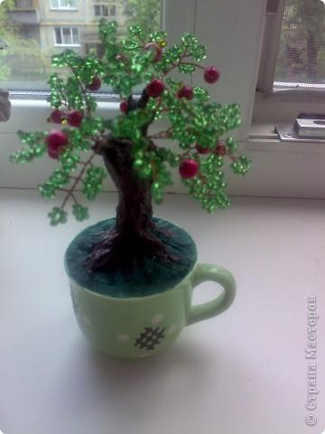 Маленькая яблонька. фото 1
