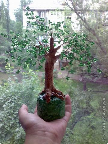 Маленькая яблонька. фото 3