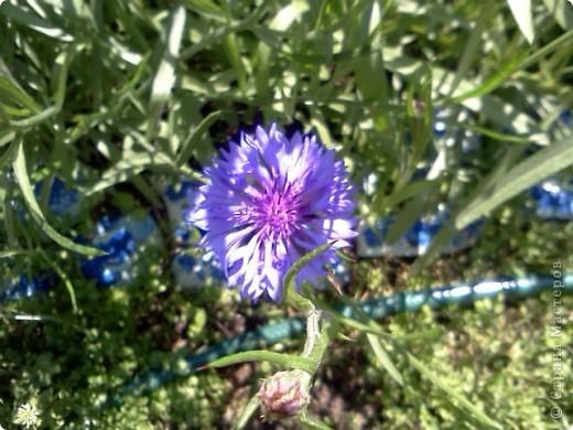 Фоторепортаж.В моем саду... фото 4