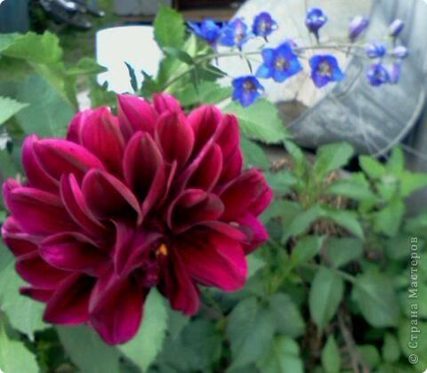 Фоторепортаж.В моем саду... фото 5