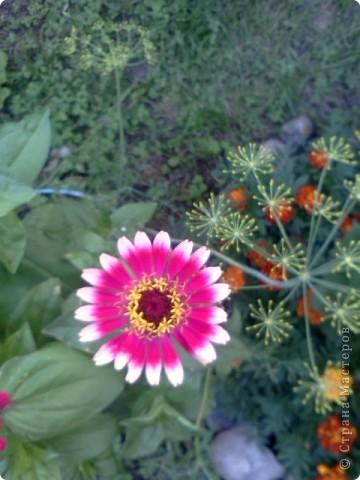 Фоторепортаж.В моем саду... фото 6