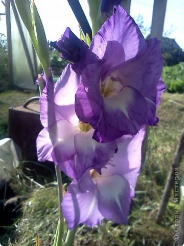 Фоторепортаж.В моем саду... фото 7