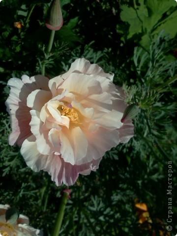 Фоторепортаж.В моем саду... фото 8
