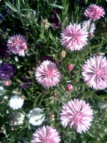 Фоторепортаж.В моем саду... фото 9