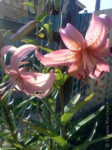 Фоторепортаж.В моем саду... фото 10