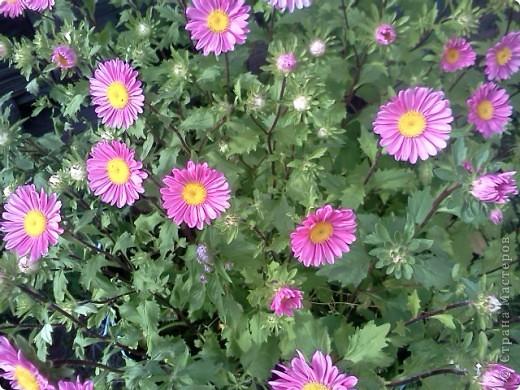 Фоторепортаж.В моем саду... фото 14