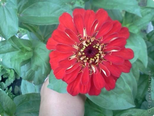 Фоторепортаж.В моем саду... фото 15