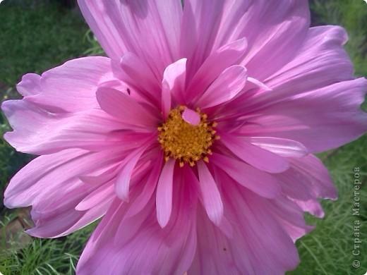 Фоторепортаж.В моем саду... фото 16