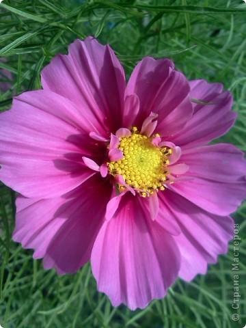Фоторепортаж.В моем саду... фото 17