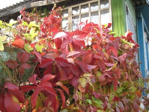 Да и как можно её не любить?  Красный-жёлтый-зелёный... Правда, красиво? фото 28