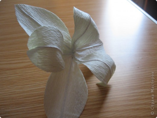 Вот такой букет из белых лилий выполнен на заказ ко Дню Учителя. фото 12