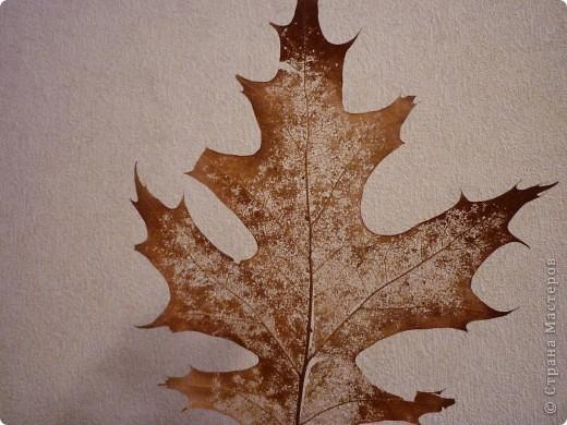 Когда мы с сыном собирали листья для гербария к нам подошла женщина и подсказала идею,как сделать вот такой  необычный листик. фото 6