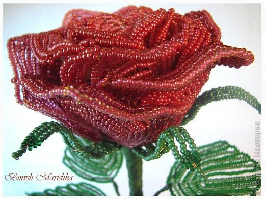 """Я сплела свою розочку в совместном плетении розы вместе с Василиной -Рая на Конфеткином форуме! Т.к. это первое мое французское плетение, то скажу честно - было сложно - никак не хотели дуги ложится ровненько, но я их победила! Конечно есть недочеты, но я очень довольна и мне моя """"Скромница"""" очень нравится! Высота розочки - 37см, диаметр цветочка - 10см. В лепестках использовала три цвета бисера. фото 1"""