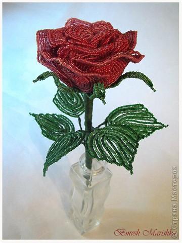 """Я сплела свою розочку в совместном плетении розы вместе с Василиной -Рая на Конфеткином форуме! Т.к. это первое мое французское плетение, то скажу честно - было сложно - никак не хотели дуги ложится ровненько, но я их победила! Конечно есть недочеты, но я очень довольна и мне моя """"Скромница"""" очень нравится! Высота розочки - 37см, диаметр цветочка - 10см. В лепестках использовала три цвета бисера. фото 3"""