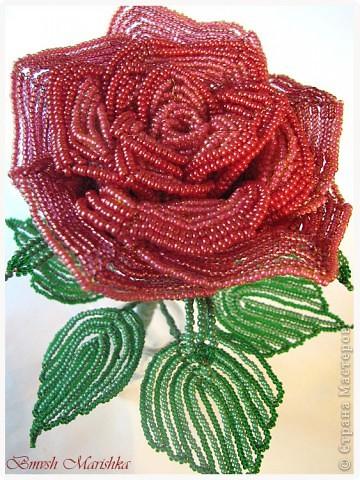 """Я сплела свою розочку в совместном плетении розы вместе с Василиной -Рая на Конфеткином форуме! Т.к. это первое мое французское плетение, то скажу честно - было сложно - никак не хотели дуги ложится ровненько, но я их победила! Конечно есть недочеты, но я очень довольна и мне моя """"Скромница"""" очень нравится! Высота розочки - 37см, диаметр цветочка - 10см. В лепестках использовала три цвета бисера. фото 4"""